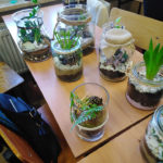 Rosliny-w-szklanych-naczyniach